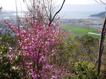 20200320 八幡山_200320_0074.jpg