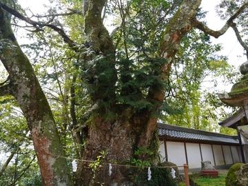 20200322 荒神山_200322_0012.jpg