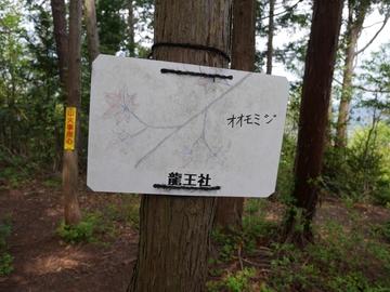 20200426 菩提寺山_200426_0106.jpg
